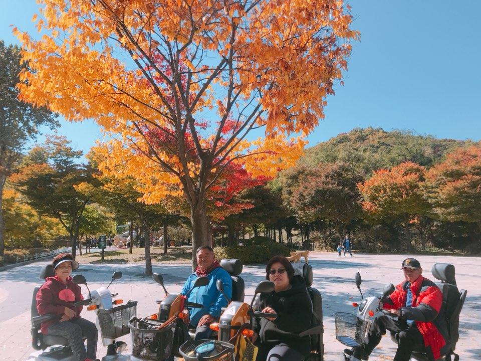 원적산 단풍나무 아래 단체사진